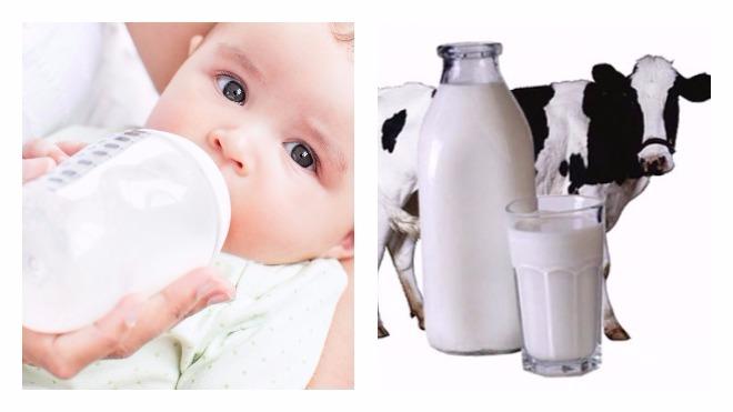 Можно ли давать младенцу козье молоко, когда у мамы нет молока. полезно ли козье молоко детям?