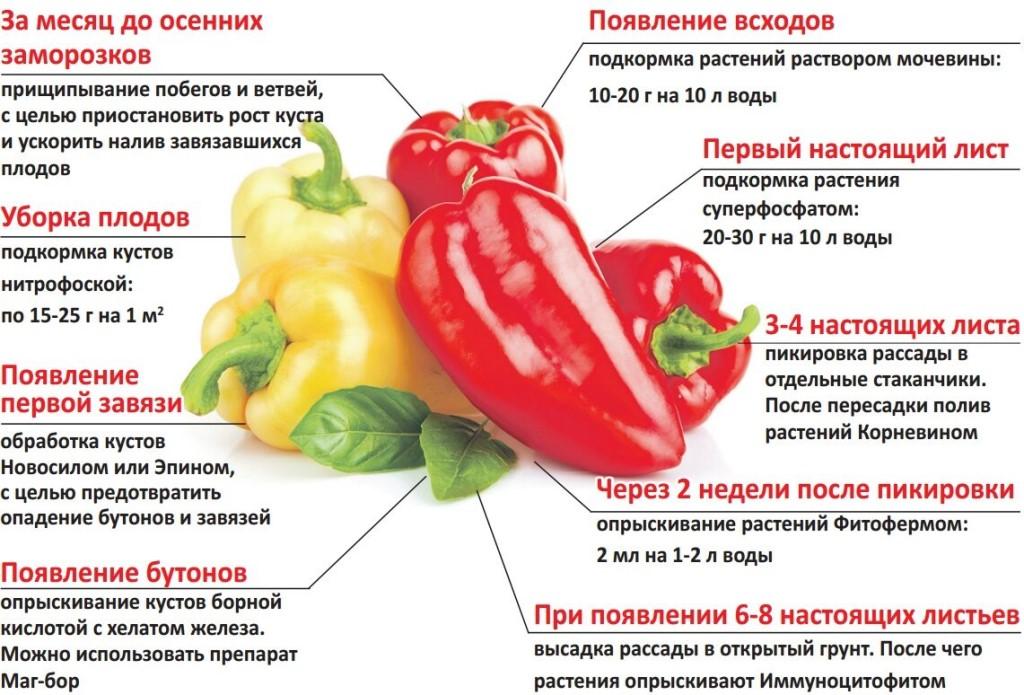 10 продуктов, которые содержат много витамина е