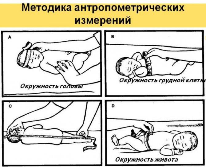 Окружность головы у детей по месяцам