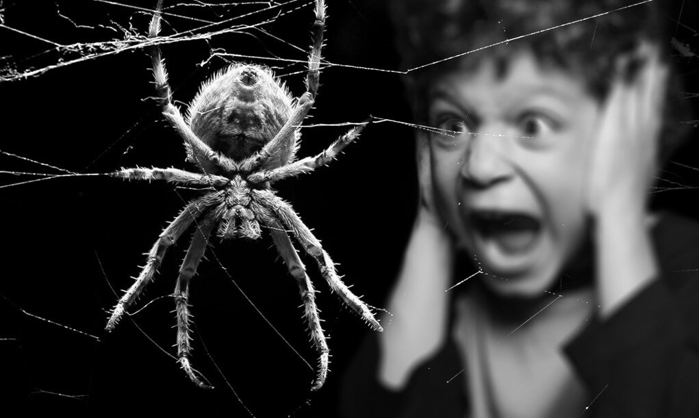 Как перестать бояться насекомых подростку. я боюсь насекомых. «я постаралась приручить свой страх»