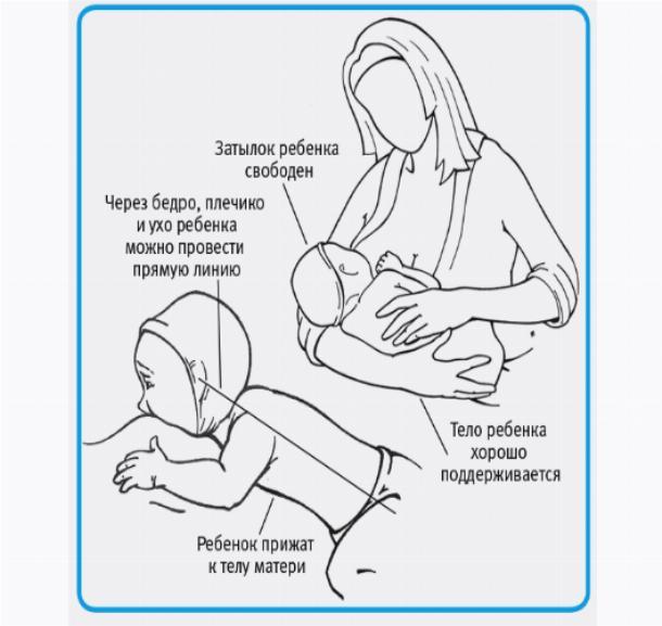Грудное кормление новорожденных после родов:  советы
