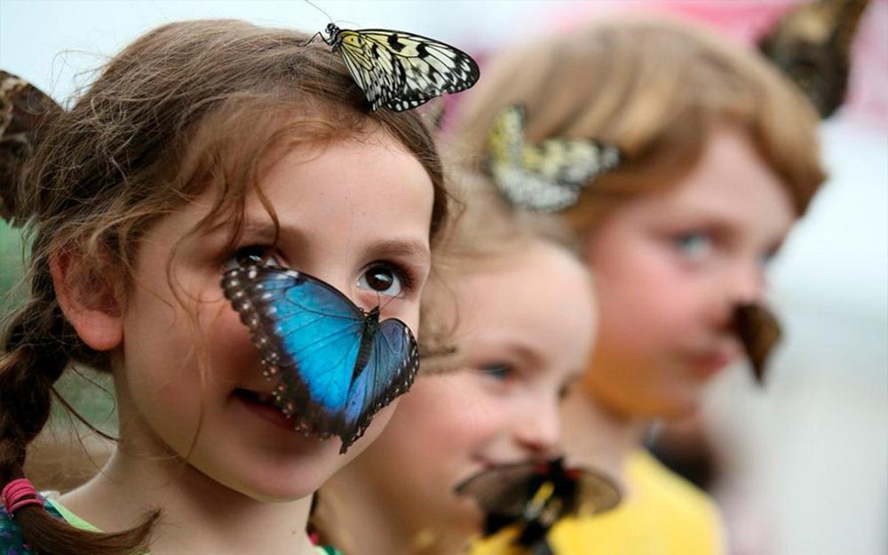 Ребенок панически боится насекомых до истерики, что делать?— психологический центр инсайт