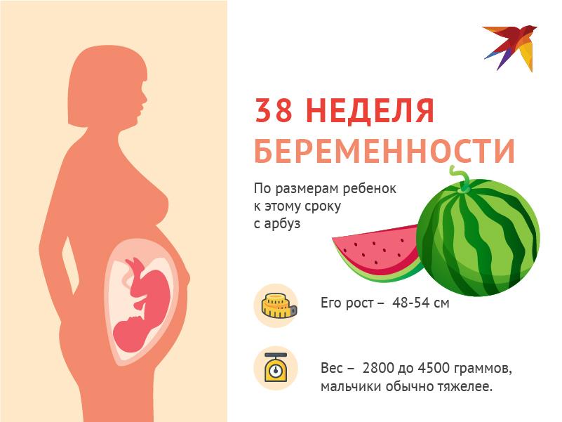 ➤ 38 неделя беременности всё что нужно знать будущей маме
