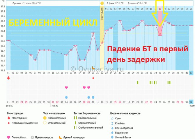 Первые сроки беременности: признаки - медицинский портал eurolab