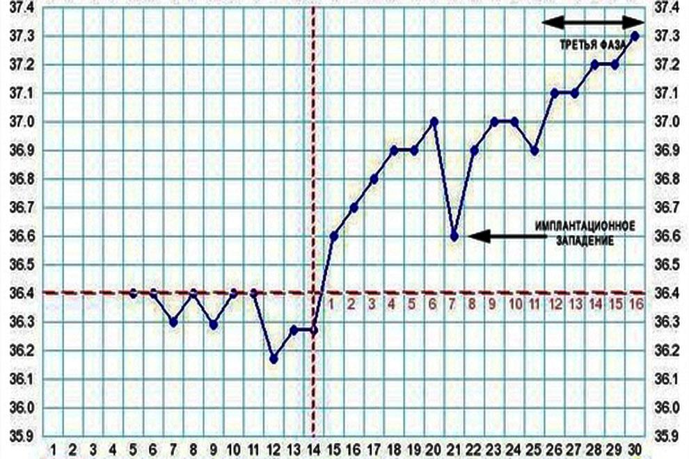 Базальная температура - что значит, как измерить, правила измерения базальной температуры