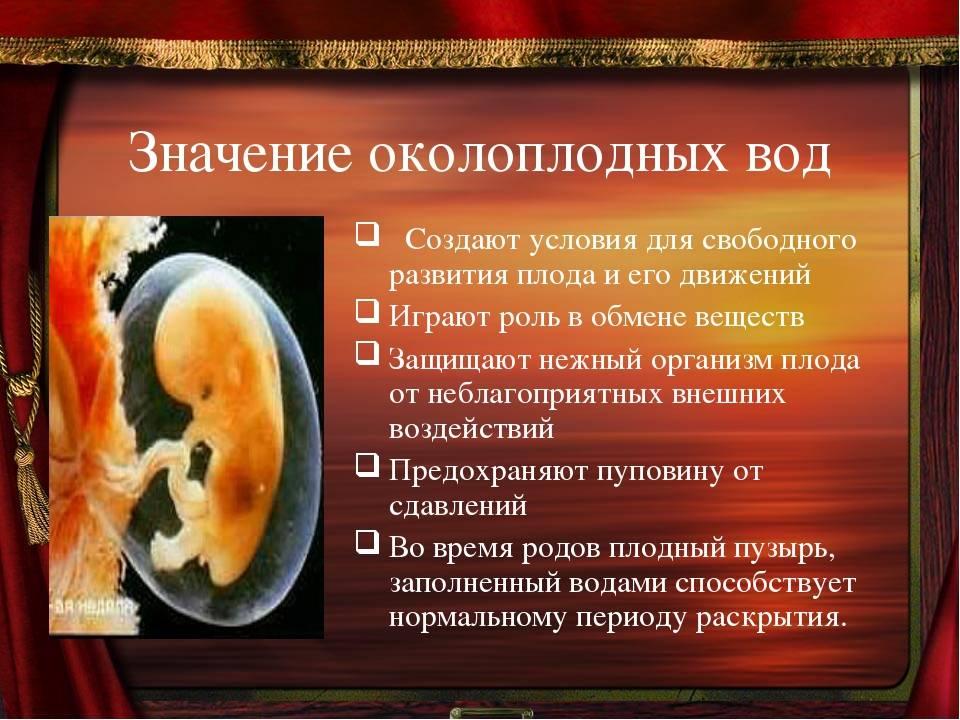 Околоплодные воды при беременности