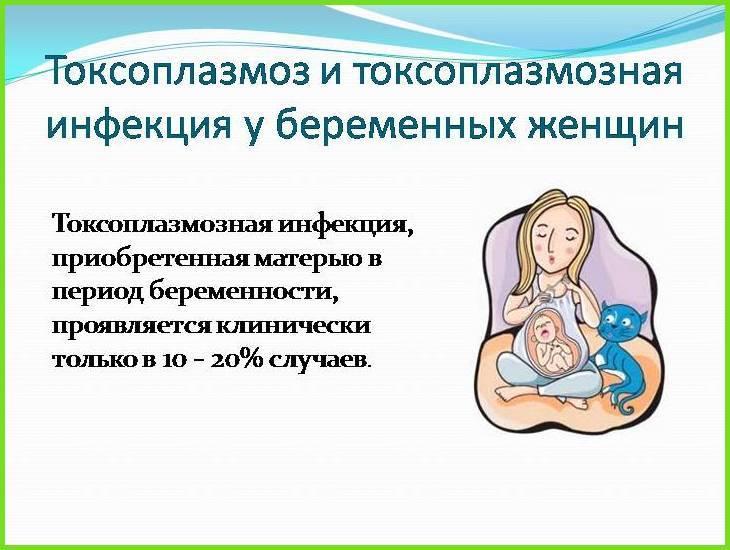 Токсоплазмоз во время беременности: не так страшен, как его малюют…