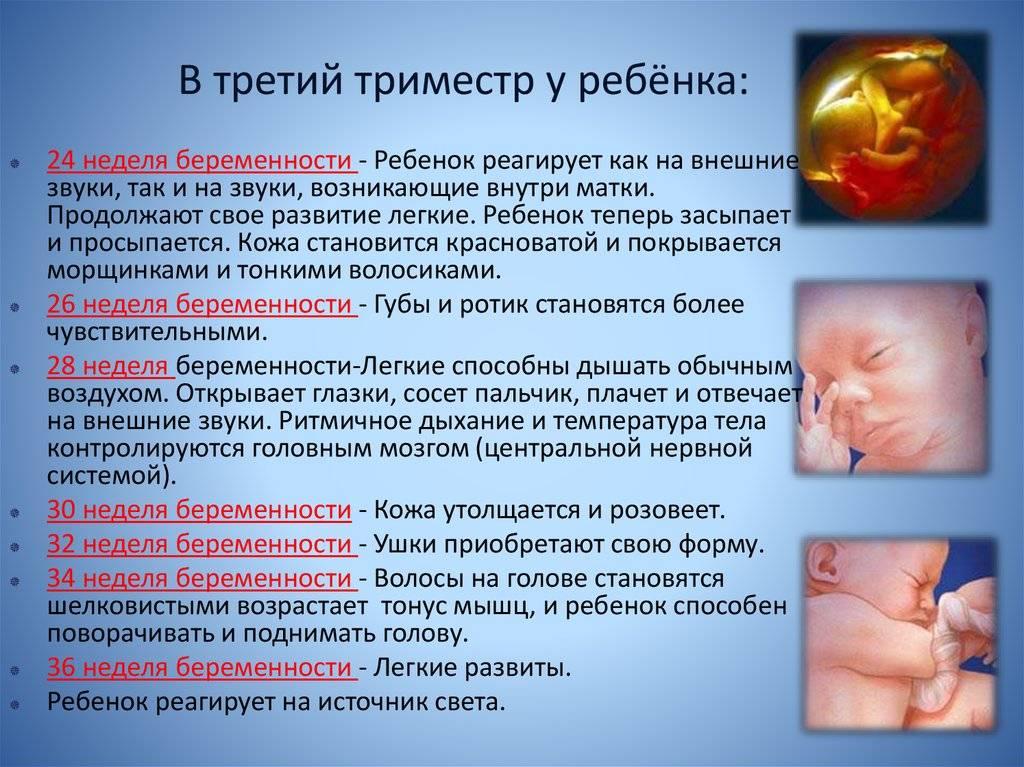 Второй и третий триместр беременности. обследования. к чему готовиться и какие могут возникнуть осложнения