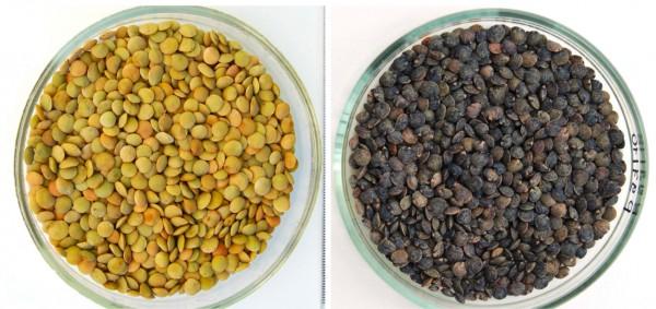 Польза чечевицы при грудном вскармливании:  рецепты для кормящей мамы