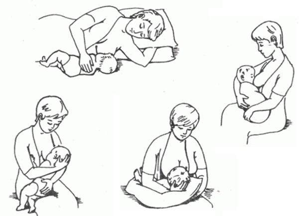 Все о кормлении грудью - правила грудного вскармливания, механизм образования молока, сцеживание молока, трещины сосков, диета и гигиена кормящей матери