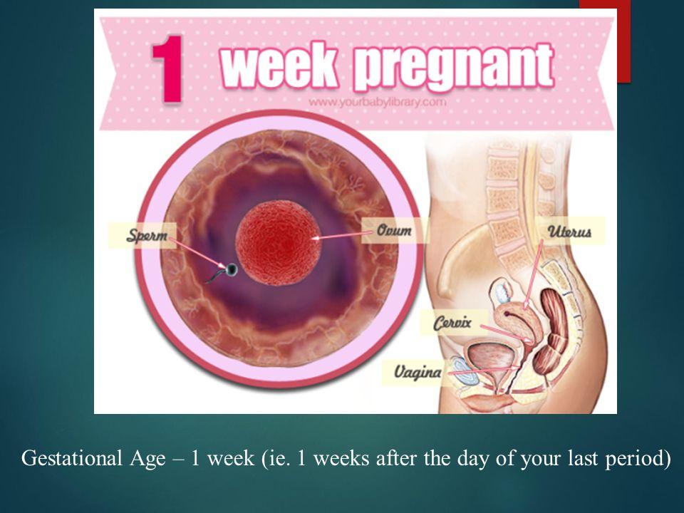 8 неделя беременности: развитие малыша и самочувствие мамы