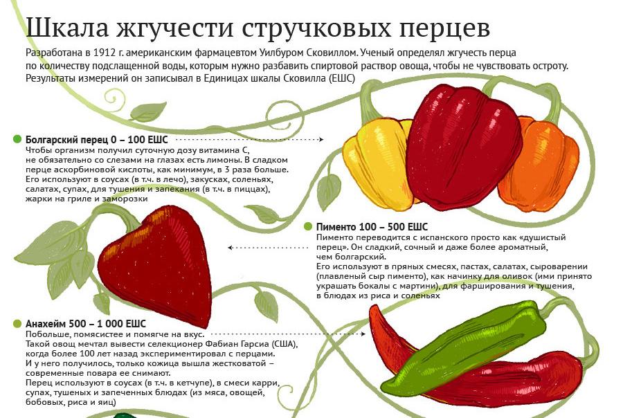 Болгарский перец при беременности: польза и вред, интересные рецепты - spuzom.com