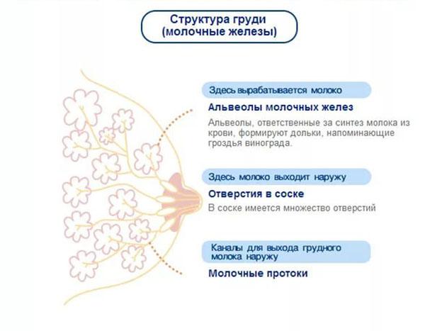 Косметологические процедуры для беременных – «юнимед-с»