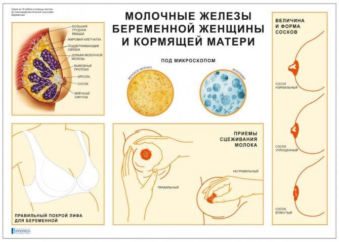 Срок годности грудных имплантов - какой срок службы силиконовых имплантов?