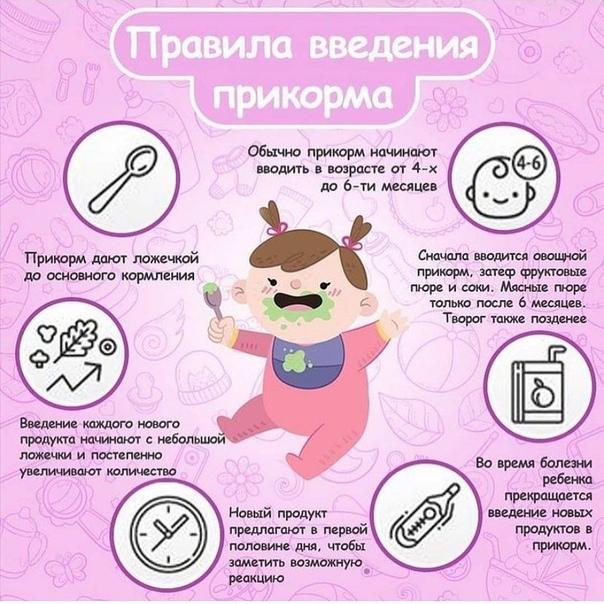 Рекомендации о введении прикорма от доктора комаровского