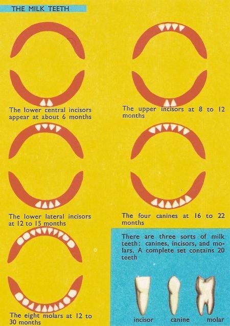 Скол зуба: всё о дентальной реставрации и наращивании повреждённых зубов