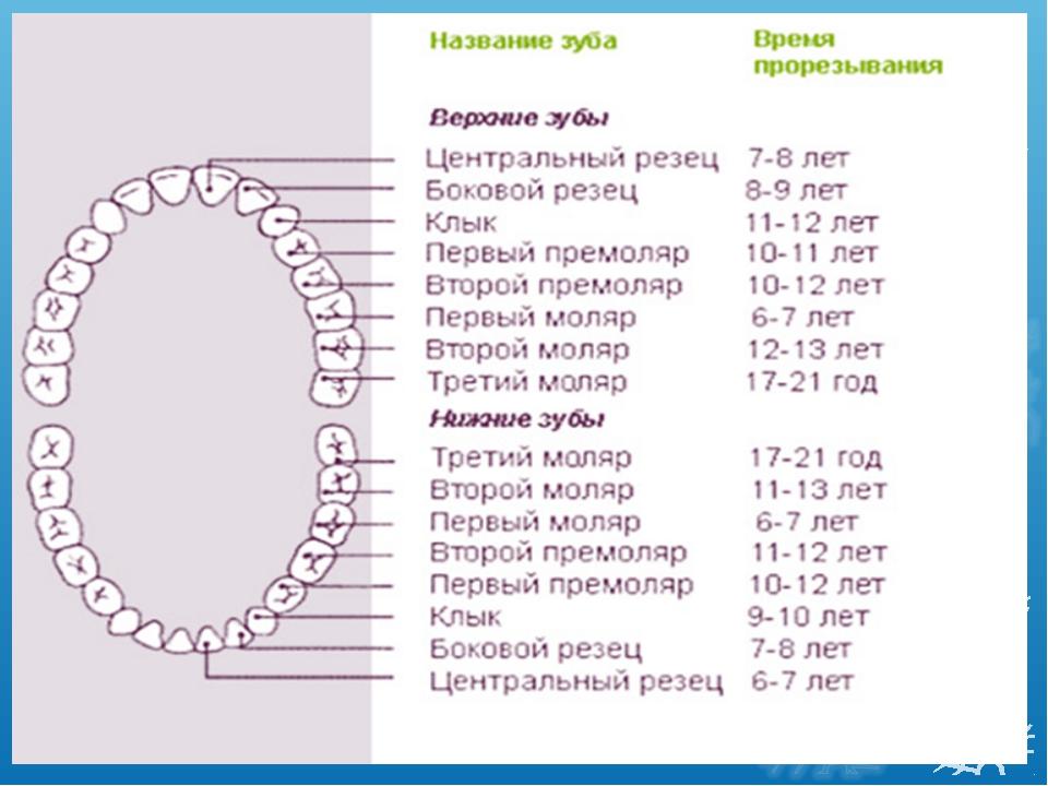 Коренные (постоянные) зубы у детей