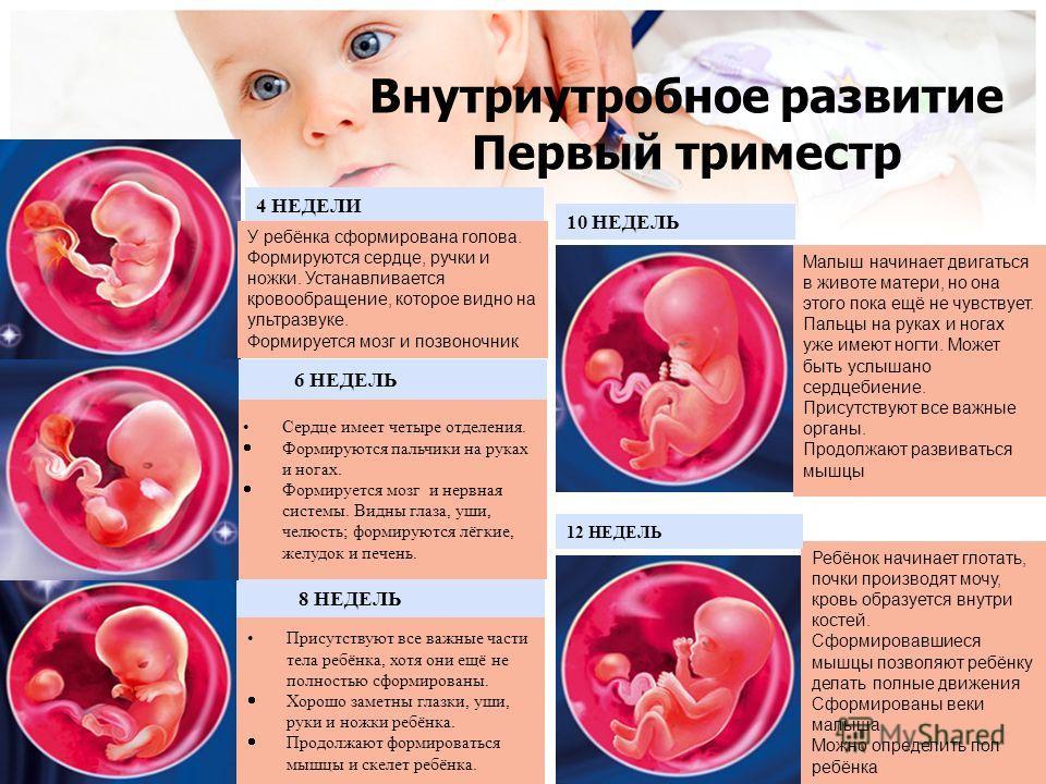 ➤ 1 неделя беременности всё что нужно знать будущей маме