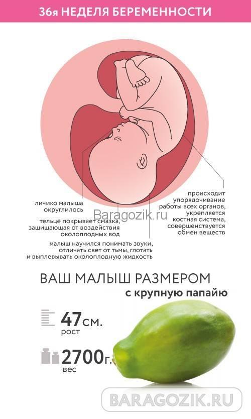 ➤ 37 неделя беременности всё что нужно знать будущим родителям