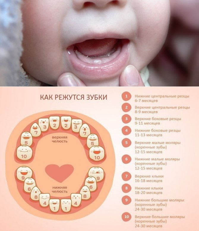 Режутся зубки и клыки у ребенка: определяем и помогаем малышу