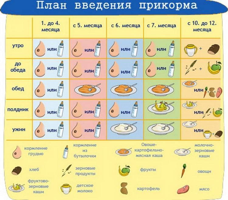 Первый прикорм: инструкция для молодых родителей. когда и как вводить прикорм?
