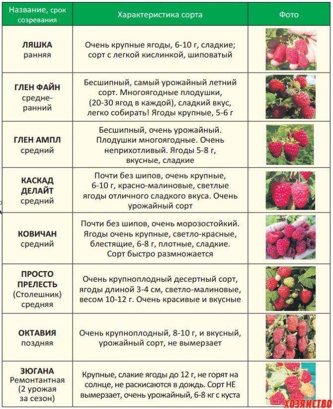 Когда можно давать ребенку ежевику. какие ягоды можно давать ребенку и с какого возраста