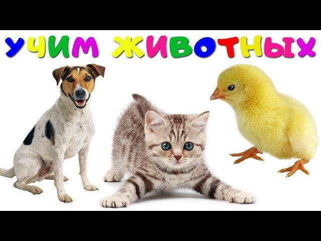 Занятие по автоматизации звуков по лексической теме «домашние животные». воспитателям детских садов, школьным учителям и педагогам - маам.ру