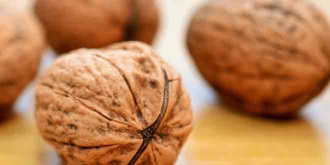 Орехи помогут родить умного малыша