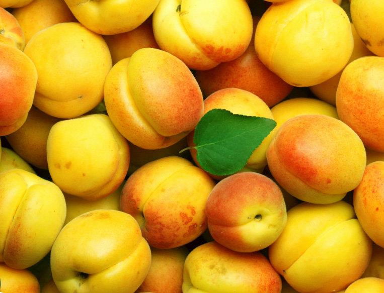Абрикос - полезные и вредные свойства, лучшие сорта, рецепты