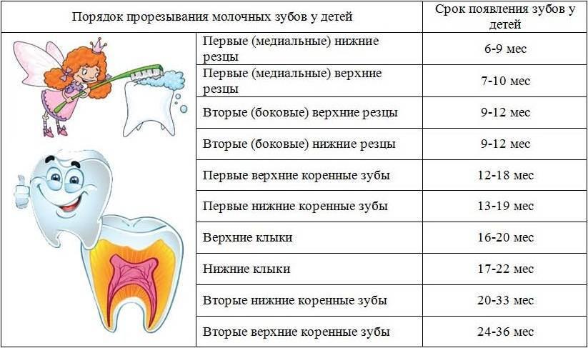 Может ли при прорезывании зубов быть лихорадка?