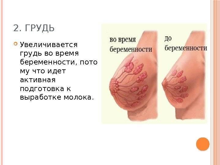Физиологические изменения в организме при беременности