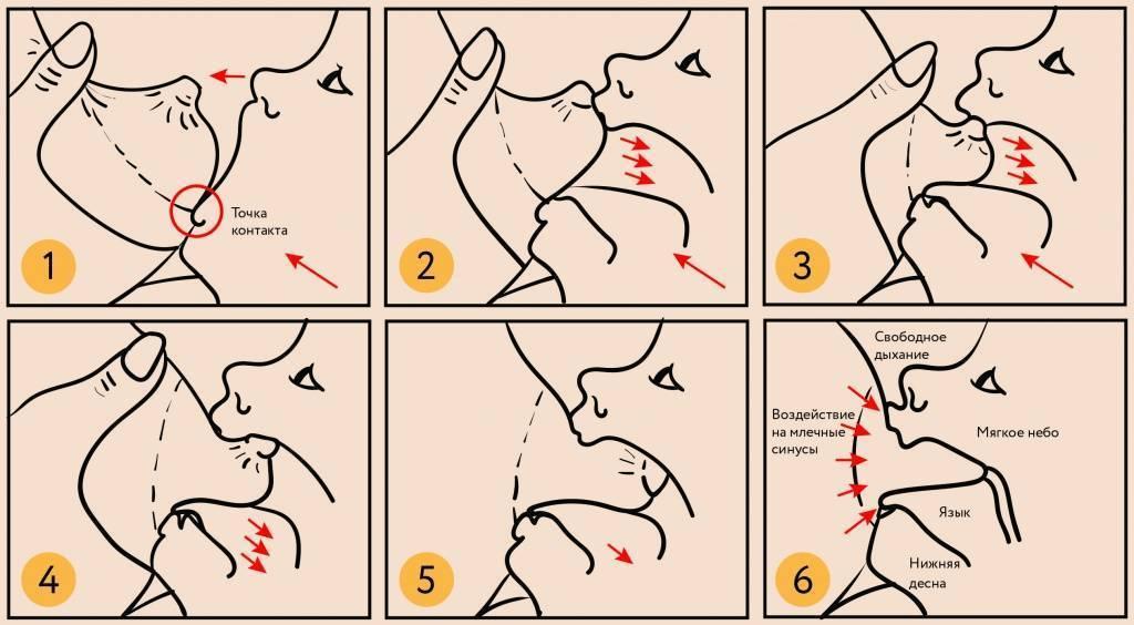 Как правильно прикладывать ребенка для кормления. позы для грудничка, правильное прикладывание к груди - поликлиника №8 город владивосток