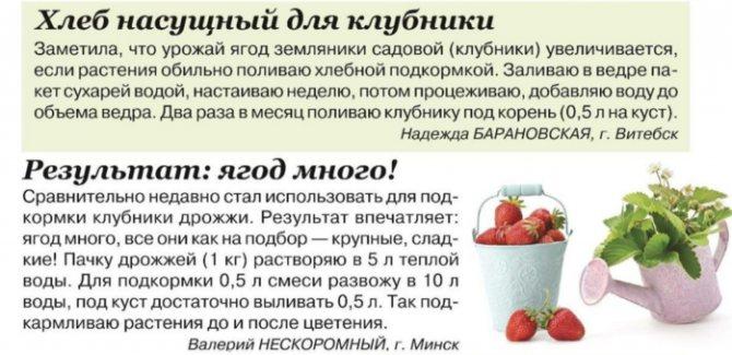 Клубника: польза и вред для здоровья, основы правильного употребления. можно ли клубнику кормящим мамам и маленьким детям