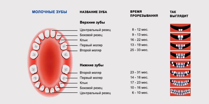 Температура при прорезывании зубов: миф или горькая реальность