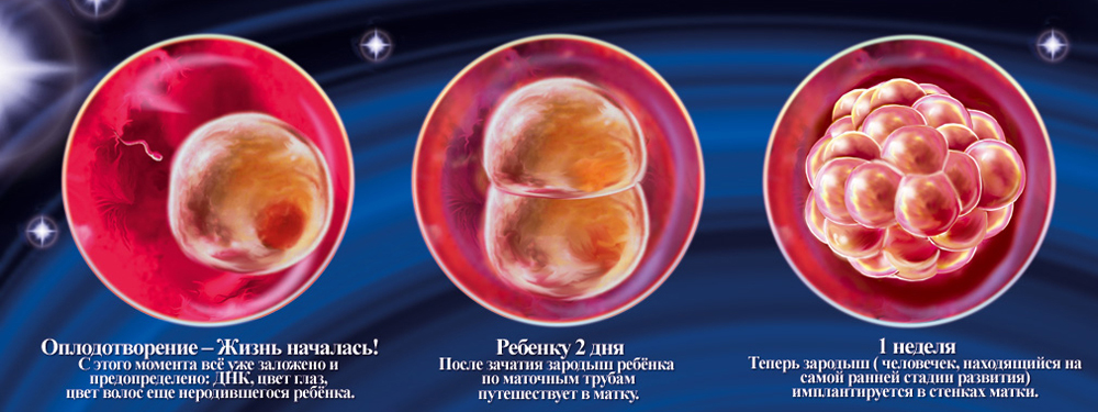 1 неделя беременности - первые признаки, что происходит с плодом