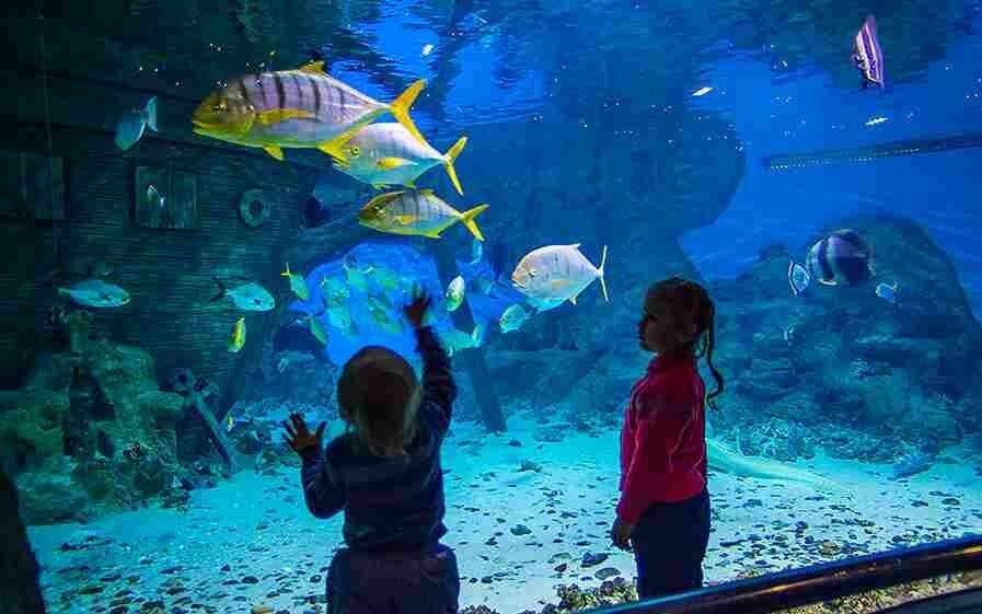 Куда сходить и что посмотреть в геленджике: топ10 экскурсий для детей